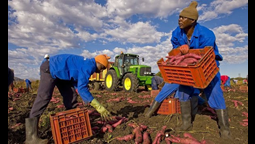 The Guardian Hosted Panel Debate: Is Big Business a Force for Good for African Farmers?