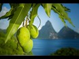Mango Madness Returns From June 13 to 17, Anse Chastanet, St Lucia