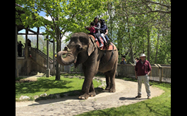 Canadian zoos among venues offering cruel, outdated activities says new global report