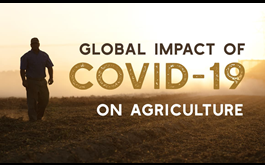 The International: Episode 4 - Protecting Food Security During COVID-19