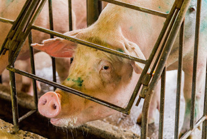 World Farm Animals Day Highlights Need for Better Animal Welfare Standards